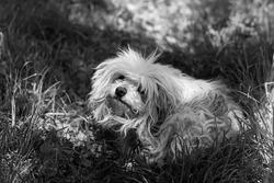 Black and white photo of a dog. Beautiful cute dog.