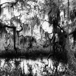 Black and white photo of a swamp taken at sunrise at Cherokee Grove near Palm Coast Florida