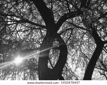 Black and white photo of a tree that i found on a public park on the city of Chihuahua, Chihuahua #1450478447