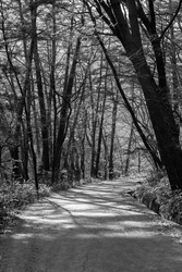 Black and white photo of a walkway where trees grow well on both sides