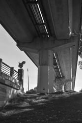 Black and white photo of bike and pedestrian path under Bart light rail tracks in Albany, California, with elevated railway and railing, chicken statue, and creek bank.