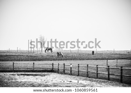Black and white photo of horses on a rural field with a fence #1060859561