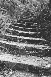 black and white photo of old stairs in nature