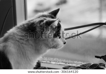 Black and white photo of the lonely cat looking out the window