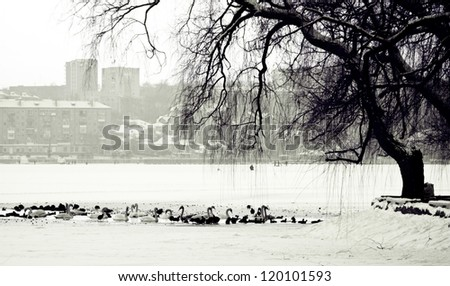 Black and white photo of the winter scene of a lake, birds and urban city