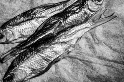 Black and white photo of three fish on vintage crumpled paper.