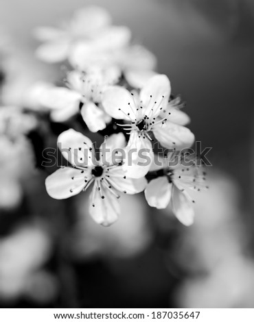 Black and white photo of tree flower #187035647