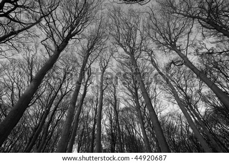 black and white pictures of trees. stock photo : Black and White