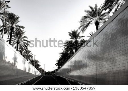 Black and white photo, road between palm trees in Dubai.  Coming up from the tunnel between walls and palm trees. Leading the way.