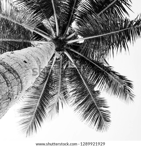 black and white photo under palm tree