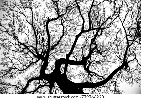 black and white photography. lonely tree. A tree without leaves.abstract background