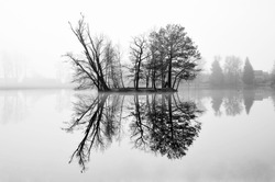 Black and white photography of an island on a lake and his reflection in water