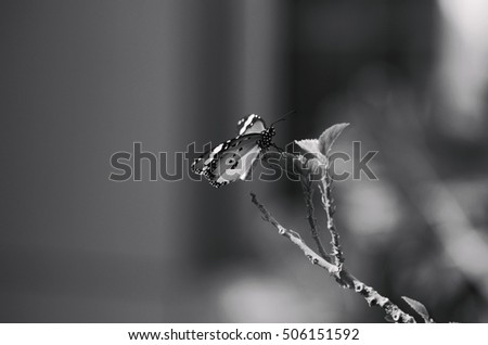 Black and white photography of butterfly.