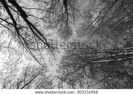 Black and white photography of scenes landscape thailand.