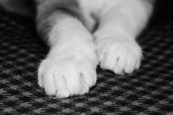 Black and white photography of white cat paws