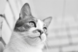 Black and white photos of a domestic cat without a breed on the balcony, in the apartment, on the windowsill.