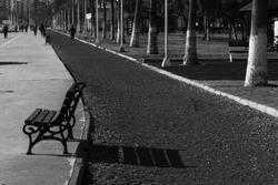 Black and White picture of a bench placed right next to the running road in a park on a sunny day
