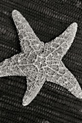 Black and white picture of a starfish against a textured background.