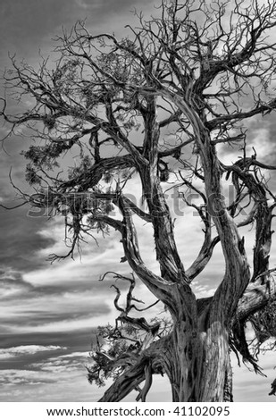 Black and White Picture of Dead Tree with Dramatic Sky in the Background.