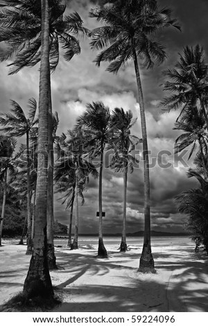 Black and white picture of palm trees on a beach in Thailand