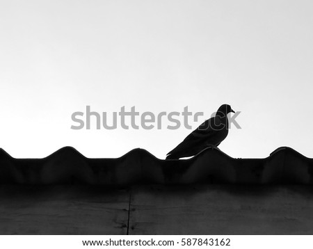 Black and white picture of single dove silhouette sitting on the roof.