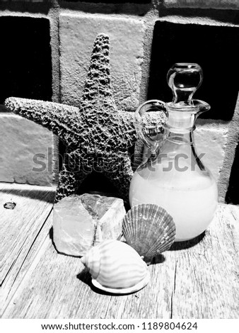Black and White Picture of Starfish and Shells