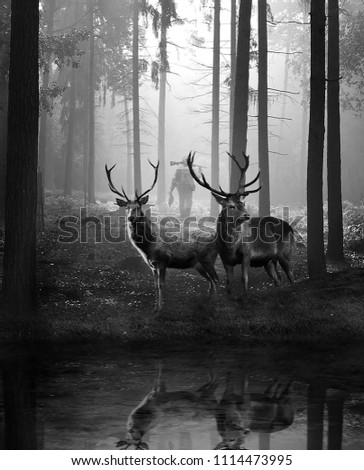 Black and white picture of two twelve horn deers looking apart. A hunter can be seen in background giving a dramatic effect to the picture.