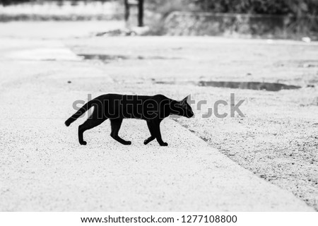 Black and white pictures of black cats walking through the road to the other side Giving a feeling of loneliness, loneliness #1277108800