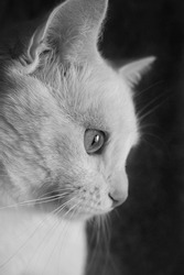 black and white profile photo of a white cat on a dark background