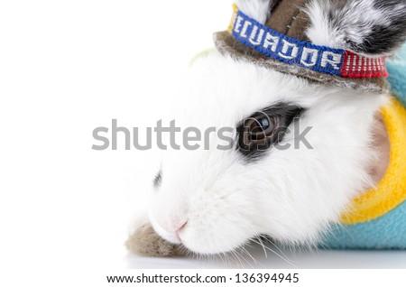 Black and white rabbit with an Ecuador bandana