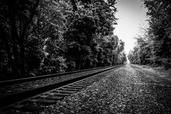 Black and White Railroad through a forest disappearing into the horizon.