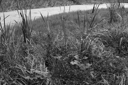Black and white retro photo of forest swamp