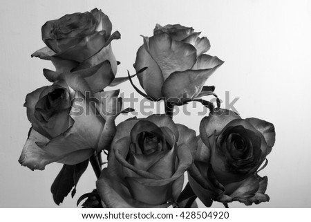 Black and white rose flowers on light background. A rose is a woody perennial flowering plant of the genus Rosa, in the family Rosaceae, or the flower it bears. #428504920