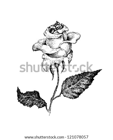 Black and white rose in ink dotted style