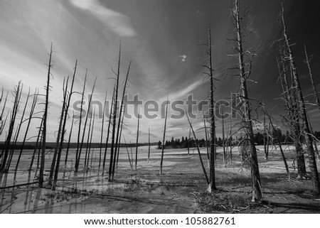 Black and white scenery and forest fire