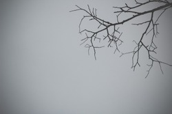 Black and white Silhouette Dry died dead branch. background leafless tree