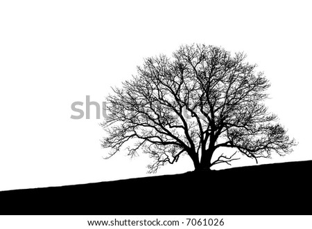black and white tree photos. lack and white tree photos
