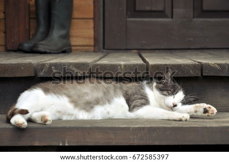 Black and white sleeping cat on a wooden terrace. #672585397
