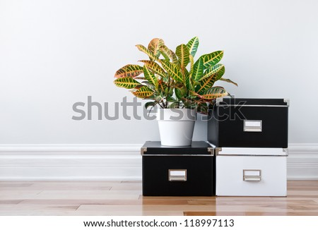 Black and white storage boxes and green plant in a room.