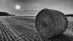 Black and white straw bale close-up in a sunlit stubble field. Summer rural landscape after cereal harvesting in backlight. Natural agricultural background. Glowing sun beams in sky with clouds.