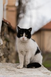 black and white street cat, stray cat sitting on the street, abandoned cat, pet on the street, Serious, perplexed stray cat, looking into the distance, in natural habitat