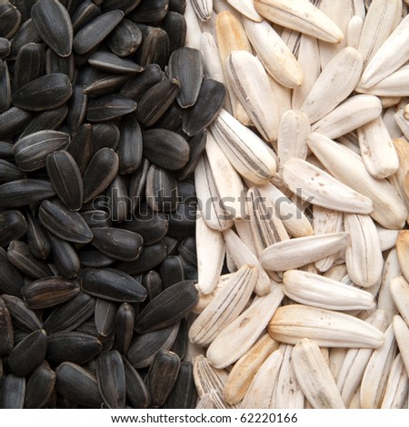 black and white sunflower seeds