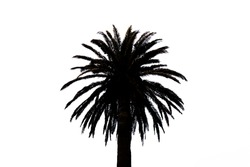 black and white symmetrical palm tree background with copy space