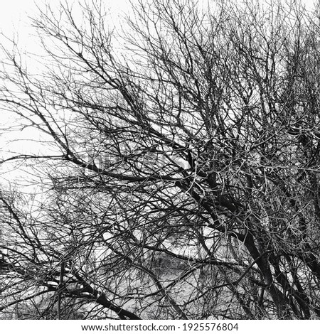 Black and white tree view in winter Stok fotoğraf ©