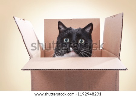Black and white tuxedo cat looking out from inside a box, teeth marks on flaps