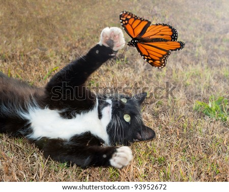Black and white tuxedo cat playing with an orange butterfly in flight