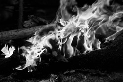 Black and white view on campfire in forest at evening