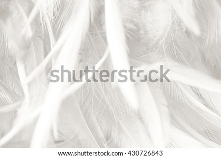 Black and white vintage color trends chicken feather texture background #430726843