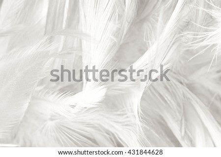 Black and white vintage color trends chicken feather texture background #431844628