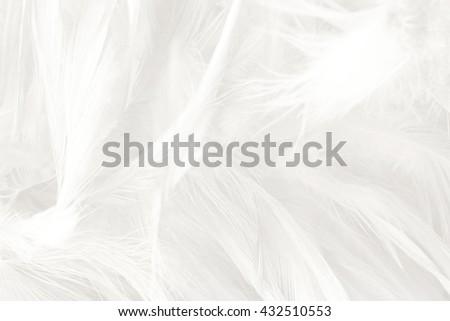 Black and white vintage color trends chicken feather texture background #432510553